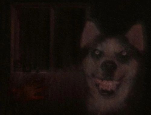 A picture of the best creepypasta Smile Dog.