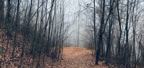 A picture of the best creepypasta The Silence of the North Woods.